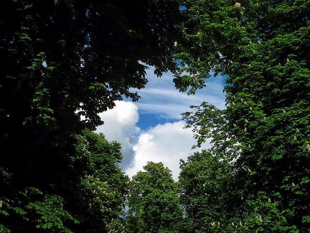 Perspektivwechsel - der Himmel über den Baumkronen